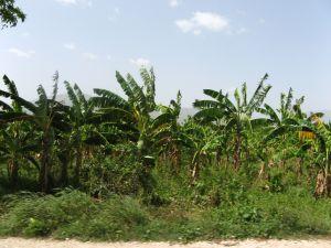 Mapy WCB pomagają w akcji ratowniczej na Haiti