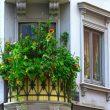 Pielęgnacja roślin balkonowych latem