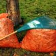 Zadbaj o drzewa, krzewy i byliny. Zbliża się zima