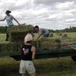 Rolniku uważaj na kleszcze - InterRisk ostrzega